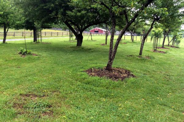 Nido-orcharda