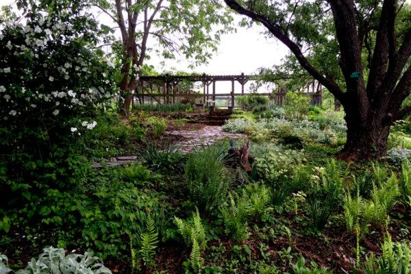 Nido shade garden1a