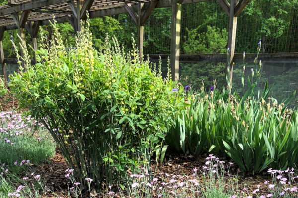 new-sun-garden
