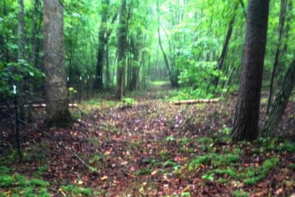 trails-8