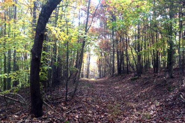 trails-9